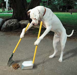 K9Poo.com Dog Waste Removal Services. Affordable Dog Waste Removal Services.